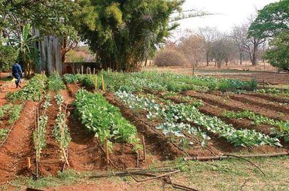 coltivare-orto-biologico_NG1