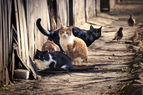 Cats_Sitting_Next_to_Wooden_Fence_grande